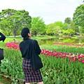 新緑の公園