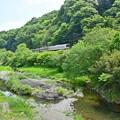 Photos: 新緑の高尾
