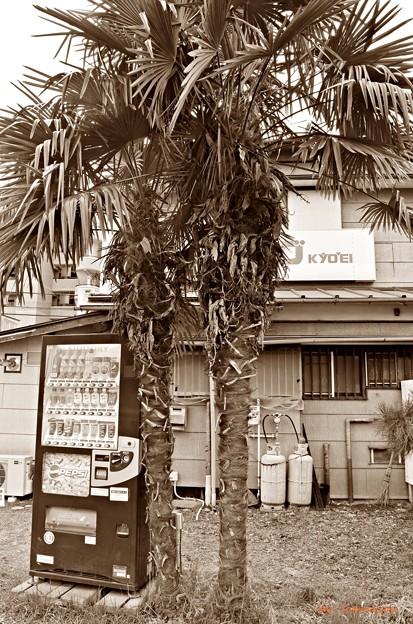 南国の自販機