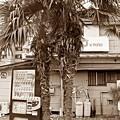 Photos: 南国の自販機