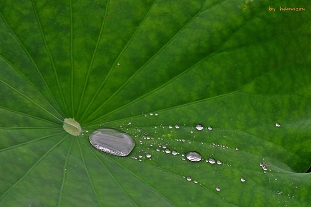 Photos: 梅雨滴