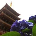 Photos: 梅雨空の五重塔
