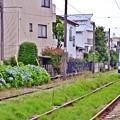 Photos: あじさい沿線(8)