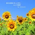 Photos: 暑中見舞い(2019)