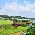 Photos: 夏色沿線(12)