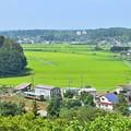 Photos: 夏色沿線(15)