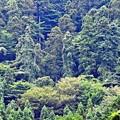 Photos: 森の山神