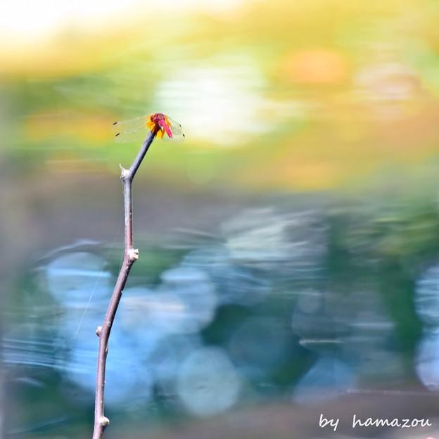 秋彩とんぼ