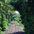 Photos: 緑のトンネル