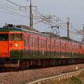 写真: 夕方のイセコマを行く115系湘南色