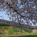 211系と桜のカーテン