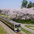 お富士山古墳に咲き誇る桜と211系