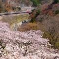 配9736レ EF81-140+209系 AT出場@桜の諏訪峡