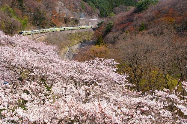 桜の諏訪峡を往くTRAIN SUITE 四季島 1