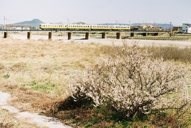 春の香東川を行く還暦記念列車
