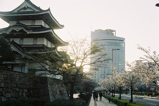 高松城と桜