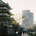 Photos: 高松城と桜