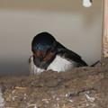 Photos: 巣の中気になる