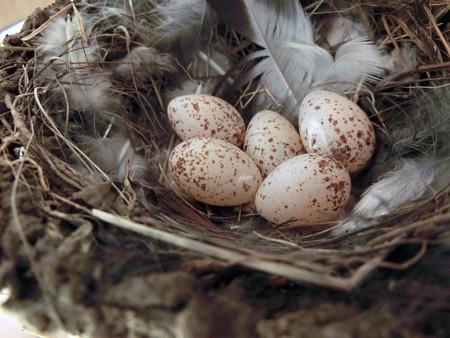 5個目を産卵