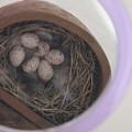 写真: 卵、確認