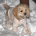 Photos: 雪初体験