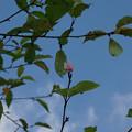 Photos: 春と間違えた桜