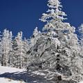 写真: 白い木立4