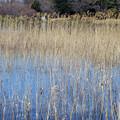 写真: 春の水辺