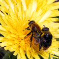 写真: 花粉まみれ