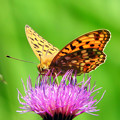 写真: 花に止まった蝶
