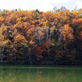 水辺の落葉樹