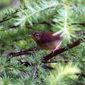 Photos: 野鳥X