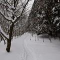 Photos: 冬のハイキングコース