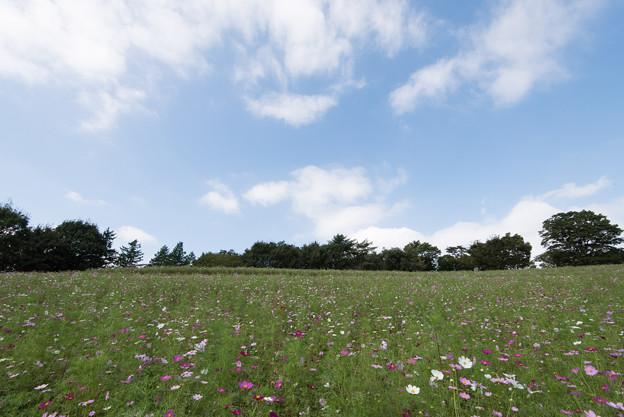 【昭和記念公園(花の丘「全景」】1