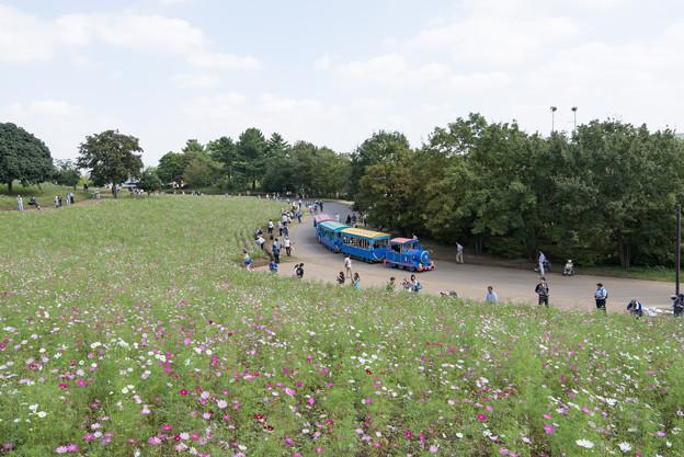 【昭和記念公園(花の丘「全景」】3