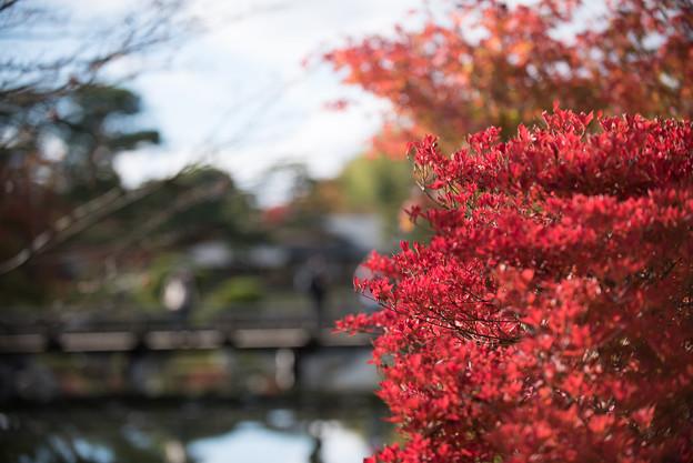 【昭和記念公園(日本庭園の紅葉ピックアップ)】1