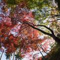 【薬師池公園(紅葉I)】4