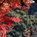Photos: 【新宿御苑(上の池近くの紅葉)】4