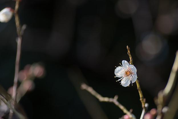 【大船植物園(翁)】1