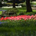 Photos: 【昭和記念公園: 渓流広場の眺め】4
