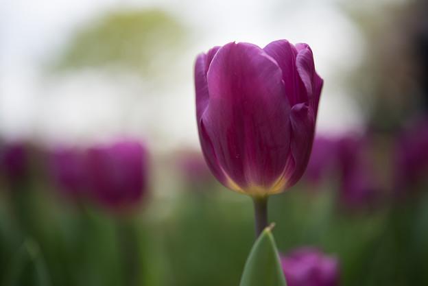 【渓流広場(パープルフラック)_PurpleFlag】3