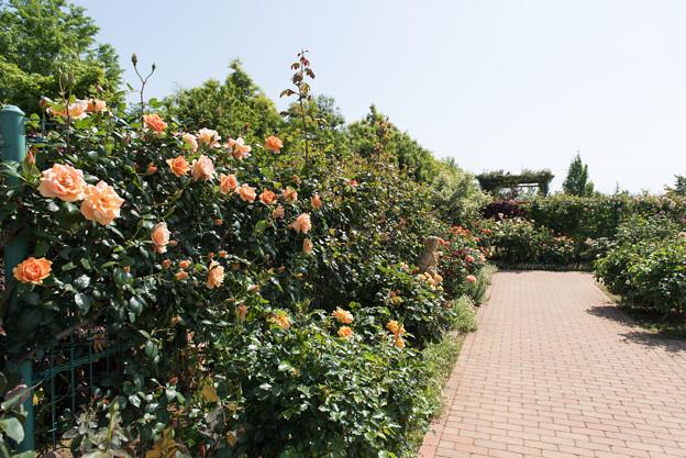 【花菜ガーデンの眺め】09