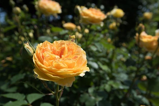 【花菜ガーデン(モリニュー)】3