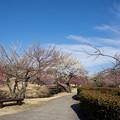 小田原フラワーガーデン【梅園の景色】1