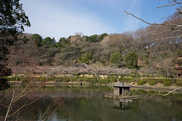【薬師池公園の梅園】1