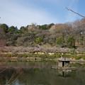 写真: 【薬師池公園の梅園】1