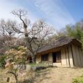 写真: 【薬師池公園の梅園】5