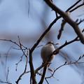 写真: 薬師池公園の野鳥【エナガ】