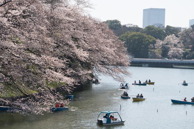 【千鳥ヶ淵の桜】5