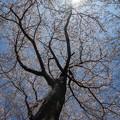 Photos: 新宿御苑【桜園地の桜の様子】6